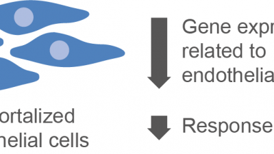 Disturbed gene expression in immortalized endothelial cells