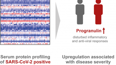 Protein profiling gives insight into the pathophysiology of COVID-19 and reveals potential biomarkers